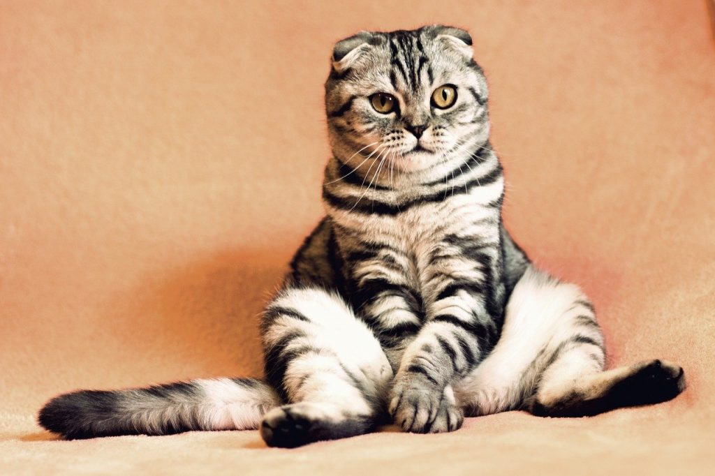 cat, kitten, pets